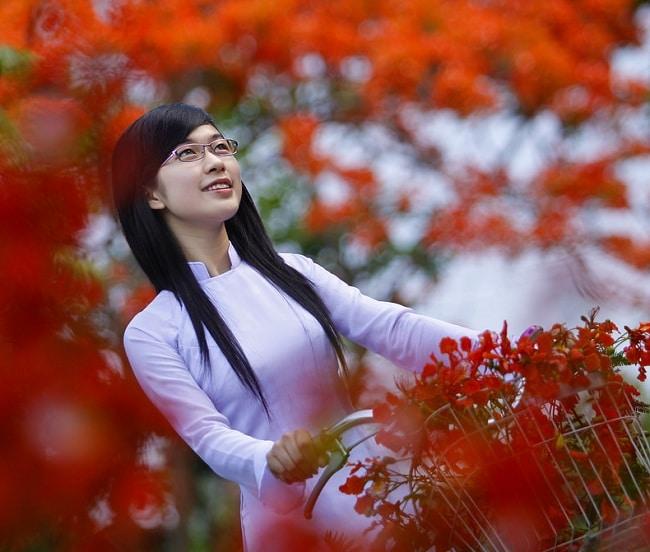 Top 10 bài văn tả cây phượng: Phượng khắc sâu trong tâm trí em