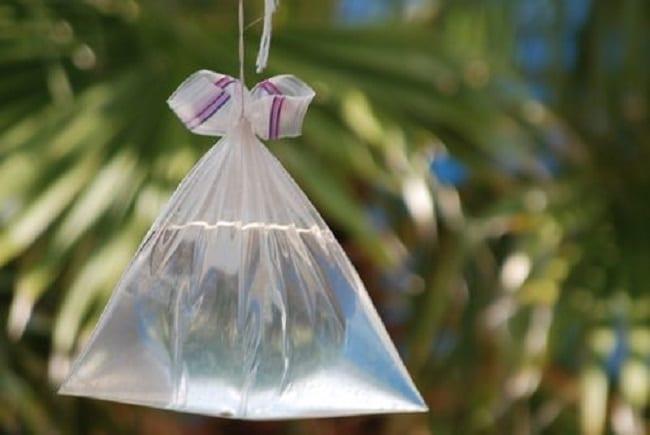 Cách diệt ruồi trong nhà đơn giản mà hiệu quả không ngờ bằng túi nilon đầy nước