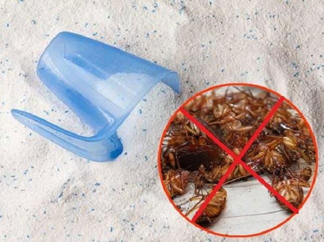 Mẹo diệt gián tuy đơn giản và hiệu quả nhất bằng bột giặt và nước xả vải