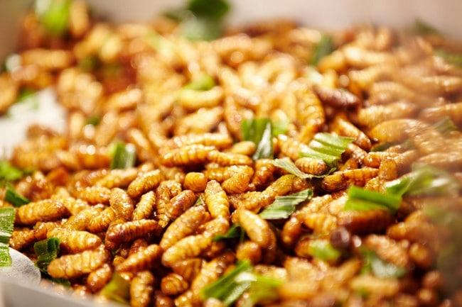 Gỏi nhộng ong
