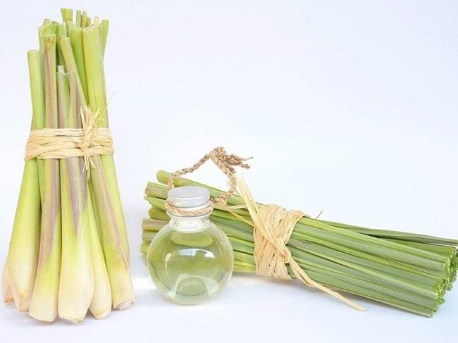 mẹo iệt gián tuy đơn giản và hiệu quả nhất bằng tinh dầu sả