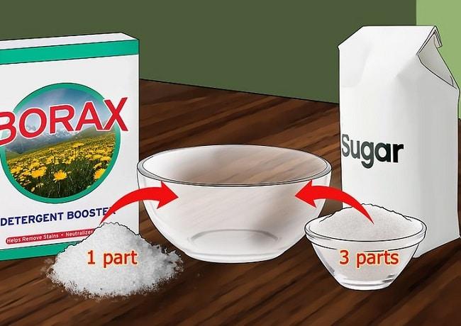 Hỗn hợp hàn the, nước và đường là cách diệt kiến tận gốc hiệu quả ko cần hóa chất
