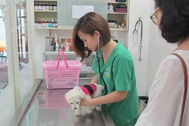 Phòng khám bệnh viện thú y PetCare là Top Phòng khám thú y uy tín và đảm bảo nhất tại TPHCM