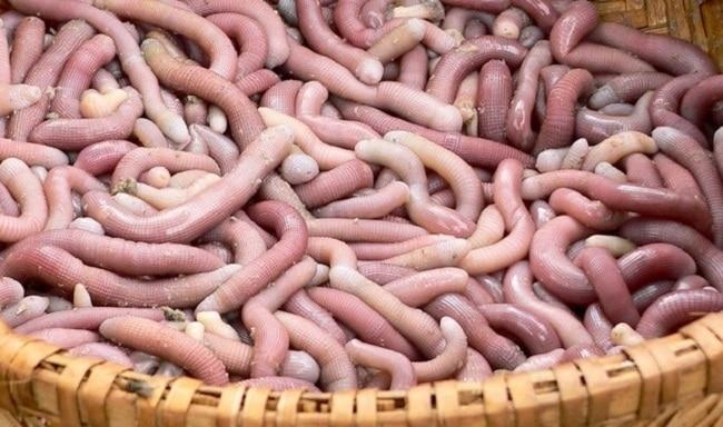 Khám phá Top 10 món ẩm thực Hạ Long hấp dẫn vô cùng - sá sùng khô và tươi