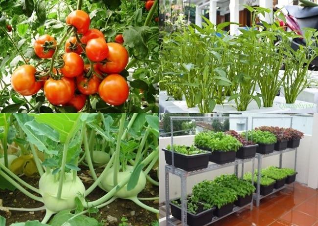 Vuonrausachtainha.com.vn là Top 10 địa chỉ bán đất sạch trồng rau đảm bảo nhất ở TP. Hồ Chí Minh