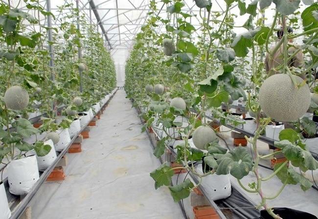 Nông Nghiệp Phố là Top 10 địa chỉ bán đất sạch trồng rau đảm bảo nhất ở TP. Hồ Chí Minh