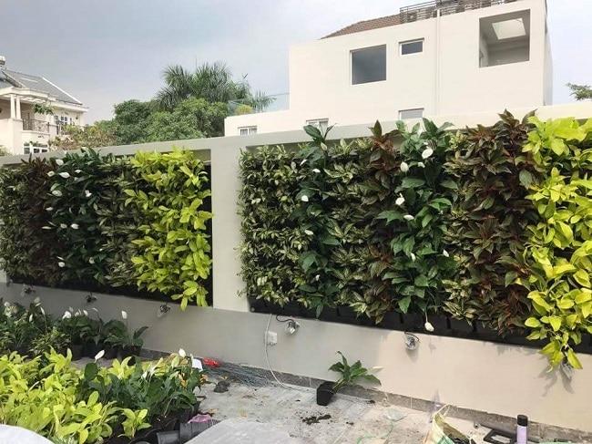 Quang Anh là Top 10 địa chỉ bán đất sạch trồng rau đảm bảo nhất ở TP. Hồ Chí Minh