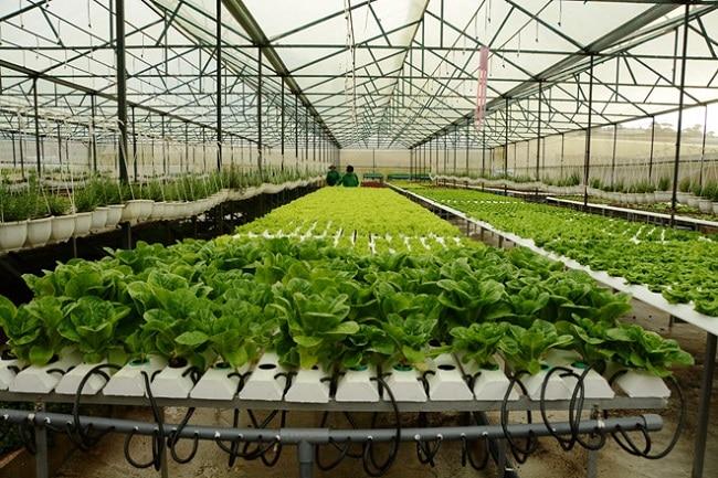 Cherry Garden là Top 10 địa chỉ bán đất sạch trồng rau đảm bảo nhất ở TP. Hồ Chí Minh