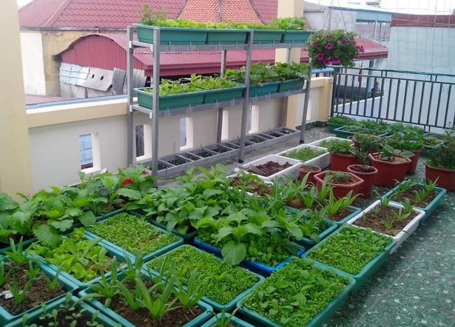Sài Gòn Hoa là Top 10 địa chỉ bán đất sạch trồng rau đảm bảo nhất ở TP. Hồ Chí Minh