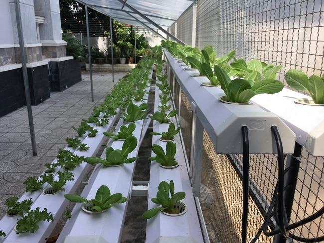 Mai Dương là Top 10 địa chỉ bán đất sạch trồng rau đảm bảo nhất ở TP. Hồ Chí Minh