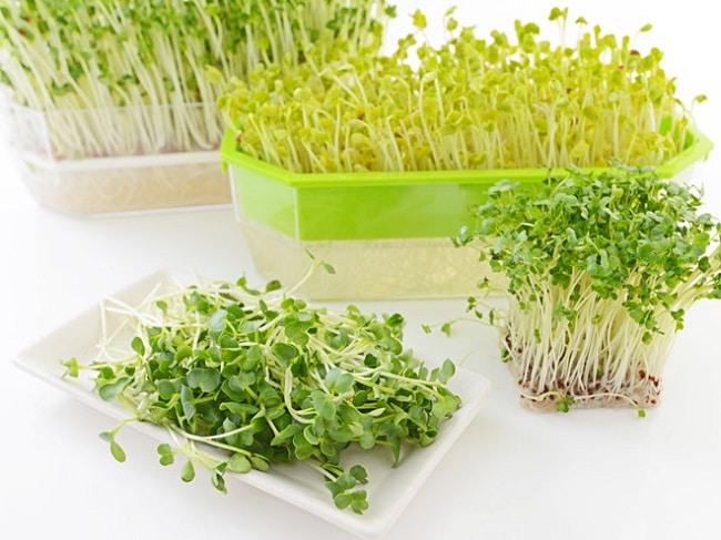 Minh châu là Top 10 địa chỉ bán đất sạch trồng rau đảm bảo nhất ở TP. Hồ Chí Minh