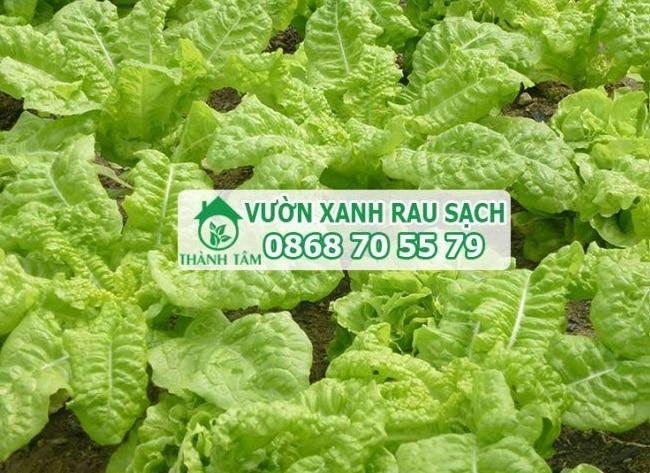Thành Tâm là Top 10 địa chỉ bán đất sạch trồng rau đảm bảo nhất ở TP. Hồ Chí Minh