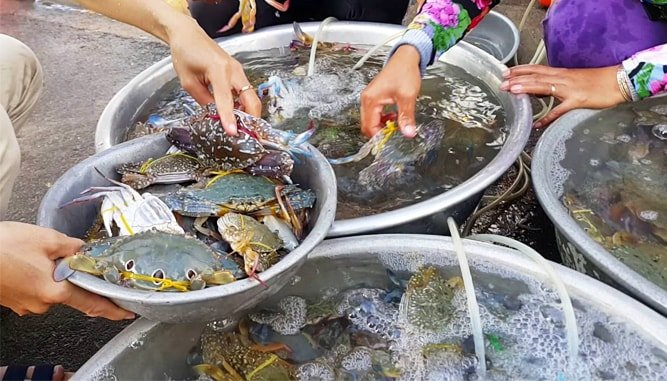 cho hai san Thanh Khe Dong