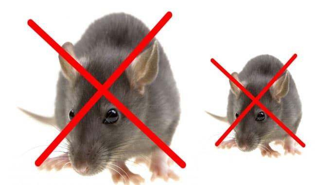 Những điều cần biết về thuốc diệt chuột Killrat - thuốc diệt chuột Killrat là gì