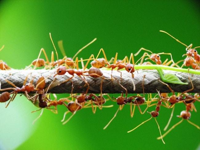 Nơi bán Các loại thuốc diệt kiến tốt nhất hiện nay