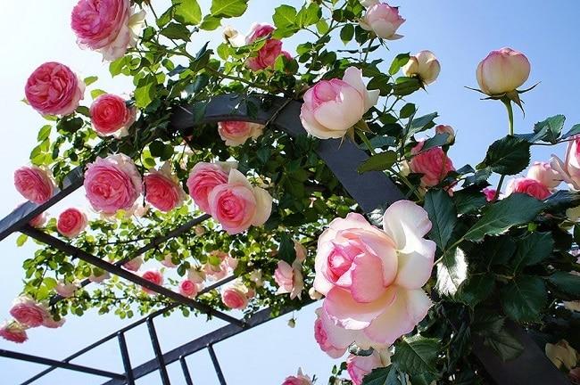 Cửa hàng Dụng cụ nông nghiệp là Top 5 Địa chỉ bán hạt giống hoa uy tín nhất tại TPHCM