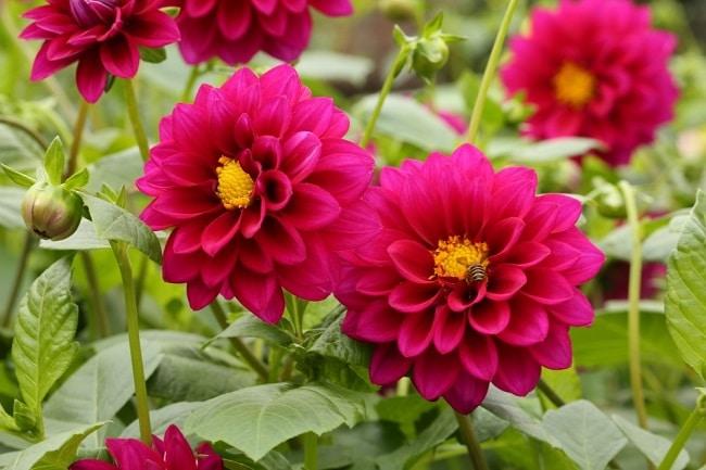 Cửa hàng Cung cấp hạt giống là Top 5 Địa chỉ bán hạt giống hoa uy tín nhất tại TPHCM