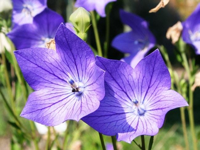 Cửa hàng Hạt giống tí hon là Top 5 Địa chỉ bán hạt giống hoa uy tín nhất tại TPHCM