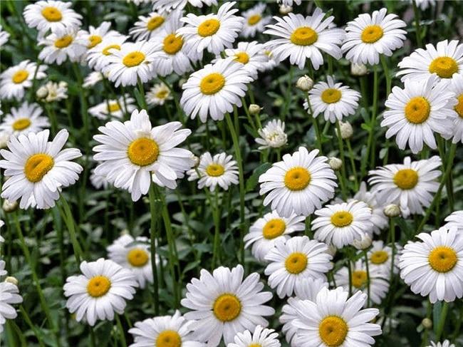 Siêu thị hạt giống là Top 5 Địa chỉ bán hạt giống hoa uy tín nhất tại TPHCM