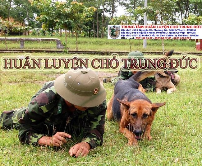 Trung tâm huấn luyện chó Trung Đức là Top 5 Trung tâm huấn luyện chó uy tín và chuyên nghiệp nhất ở TPHCM