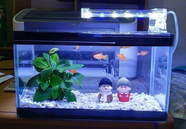quà sinh nhật cho bạn trai bể cá mini