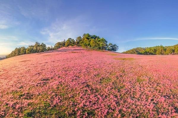 Top 10 địa điểm chụp ảnh cưới Đà Lạt - Đồi cỏ hồng