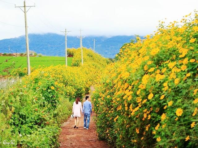 Top 10 địa điểm chụp ảnh cưới Đà Lạt  - Hoa Giả Quỳ