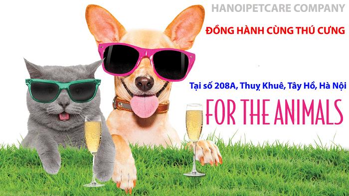 Top 10 phòng khám thú y uy tín nhất Hà Nội petcare