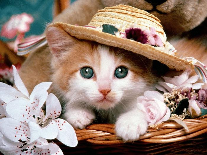Top 10 địa chỉ mua mèo cảnh giá rẻ, chất lượng nhất Hà Nội - Bảo Sinh