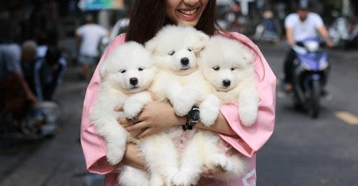 Top 10 địa chỉ mua mèo cảnh giá rẻ, chất lượng nhất Hà Nội - chú Gióng