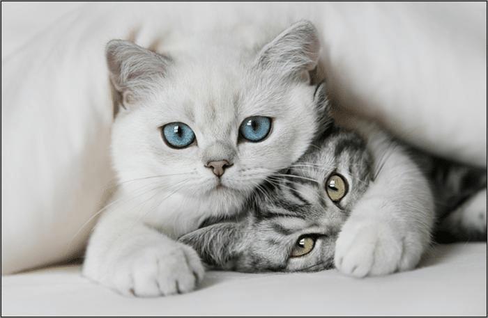Top 10 địa chỉ mua mèo cảnh giá rẻ, chất lượng nhất Hà Nội - jpet