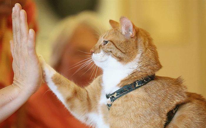 Top 10 địa chỉ mua mèo cảnh giá rẻ, chất lượng nhất Hà Nội - Loli pet