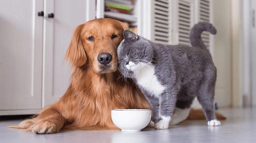 Top 10 địa chỉ mua mèo cảnh giá rẻ, chất lượng nhất Hà Nội - pet city