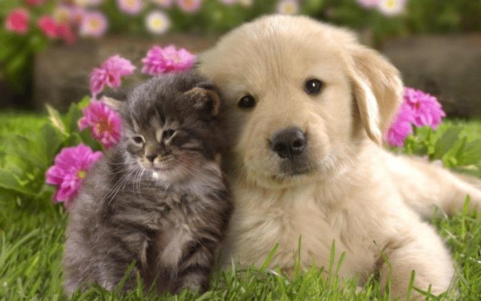 Top 10 địa chỉ mua mèo cảnh giá rẻ, chất lượng nhất Hà Nội - shop thú kiểng