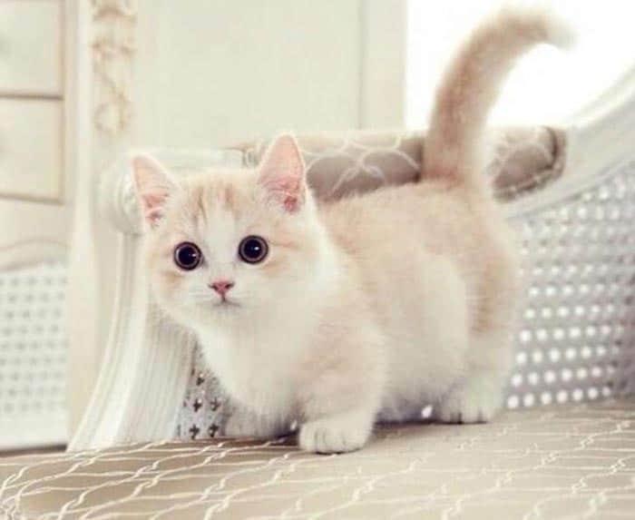 Top 10 địa chỉ mua mèo cảnh giá rẻ, chất lượng nhất Hà Nội -xóm mèo