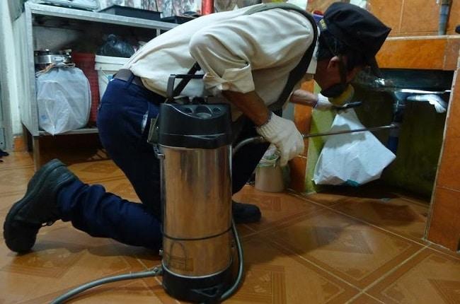 Công ty diệt mối quận Tân Phú Anh Thư