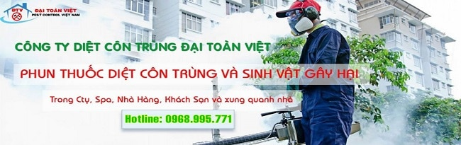 Diệt mối quận 12 Đại Toàn Việt