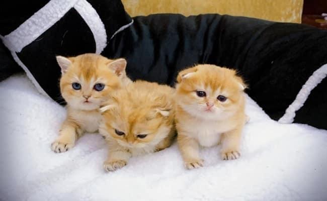 Trại mèo nhà Chin