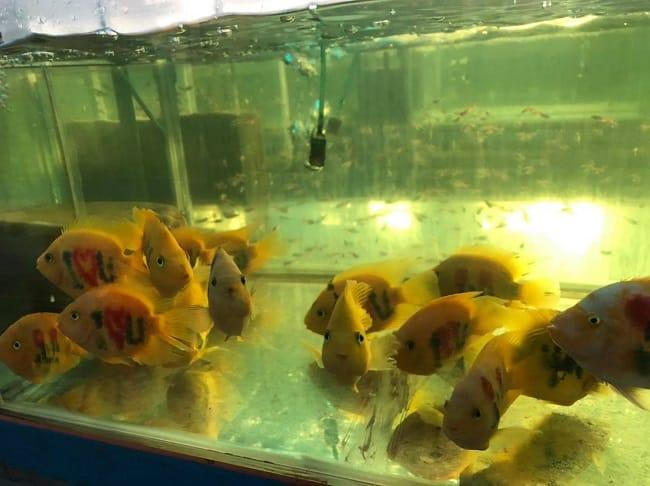 Sản phẩm tại trại cá Châu Tống