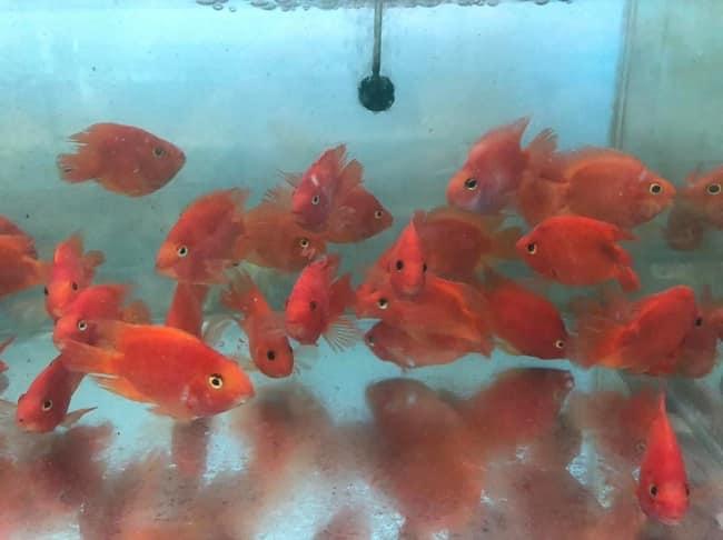 Trại cá Châu Tống