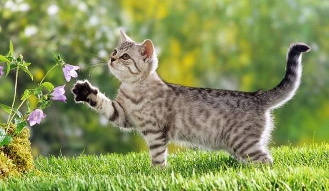 Top 6 Cửa hàng bán mèo ở TPHCM uy tín nhất