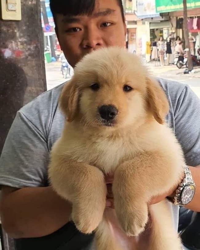 S&C Dog Shop