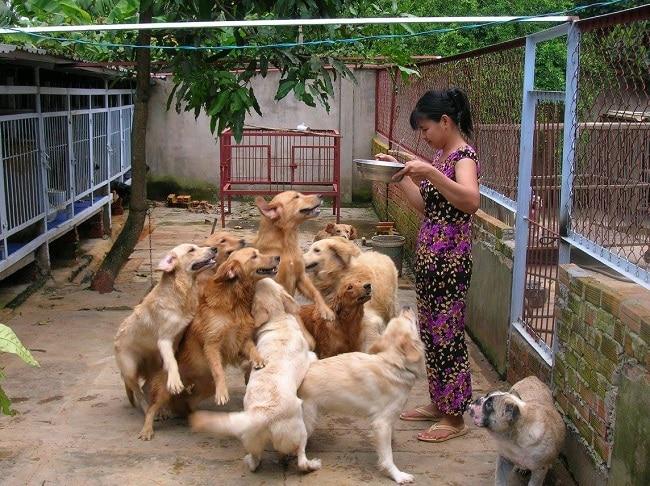 Trại chó Tiến Vinh